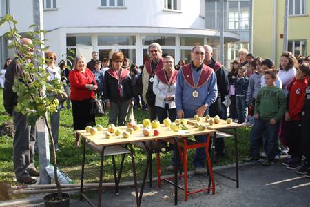Agosto 2012: Piantumazione di un melo cotogno nelle scuole